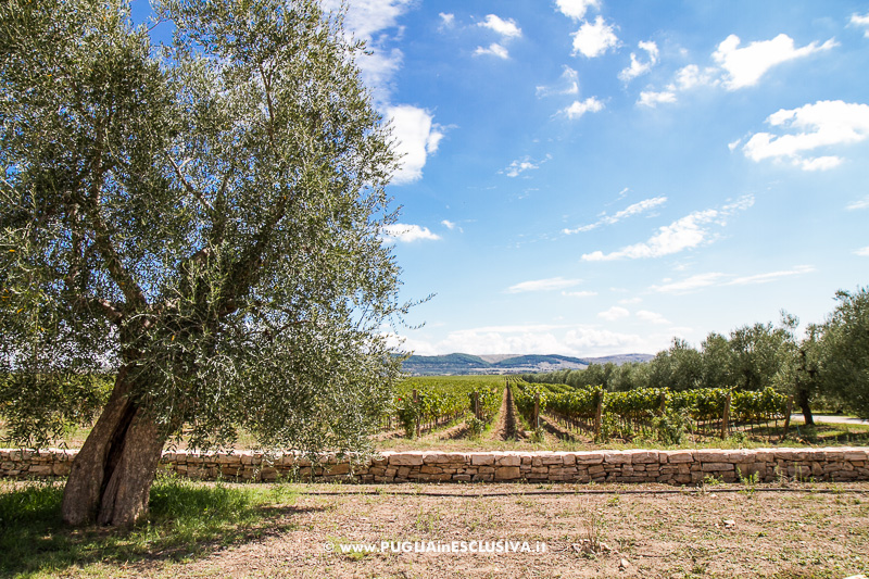 Apulia Attraction visita le Cantine Tormaresca